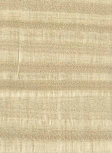 Eucalyptus Terra E5.119